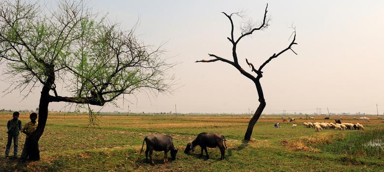 Indians think ISIS and climate change are more dangerous to us than China