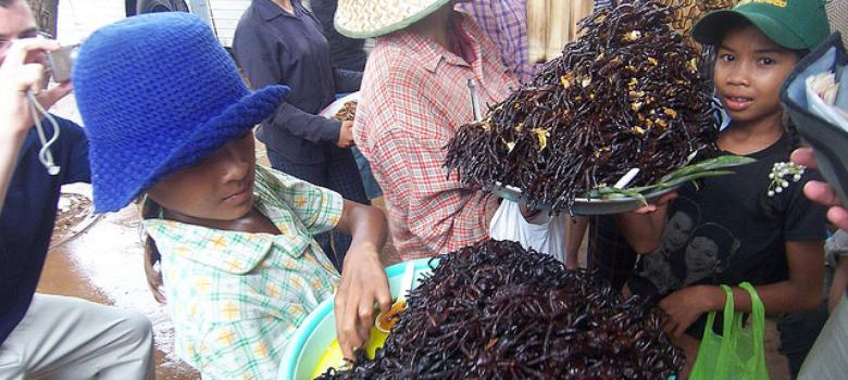 Indian scientists studying how insects, the staple of Bodo diet, could stave off global famine