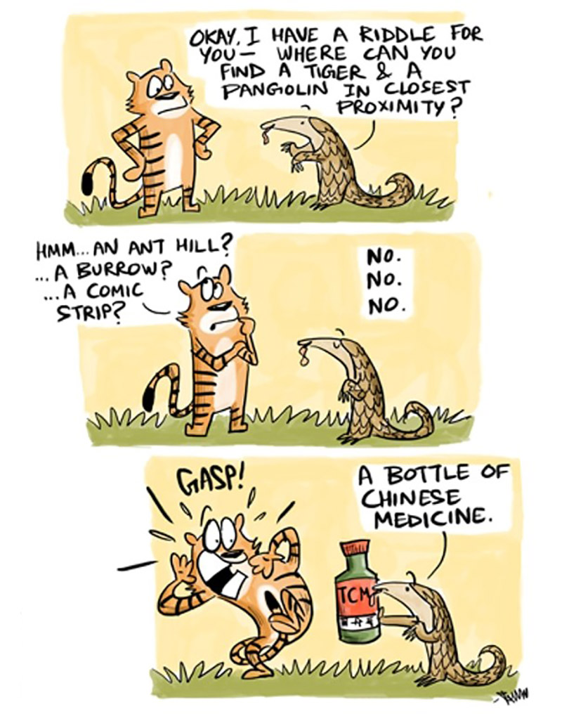 Tigers and Pangolins. Image credit: By Rohan Chakravarty/Green Humour