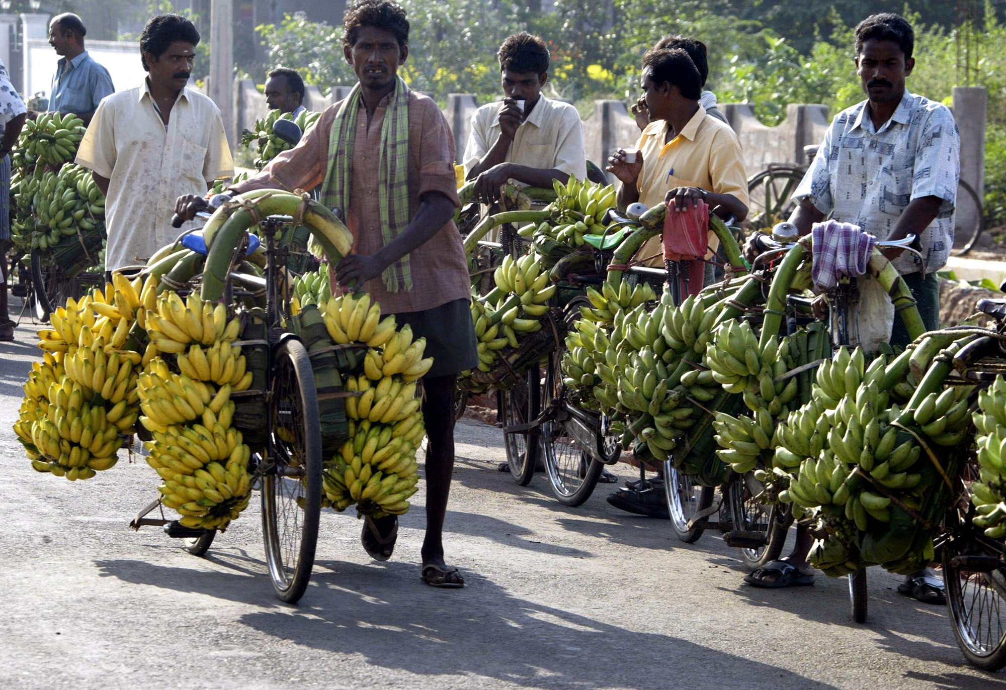 India is the world's top producer of banana, mango and grapes. The country is second in the global production of fruits and vegetables. (Credit: Noah Seelam / AFP)