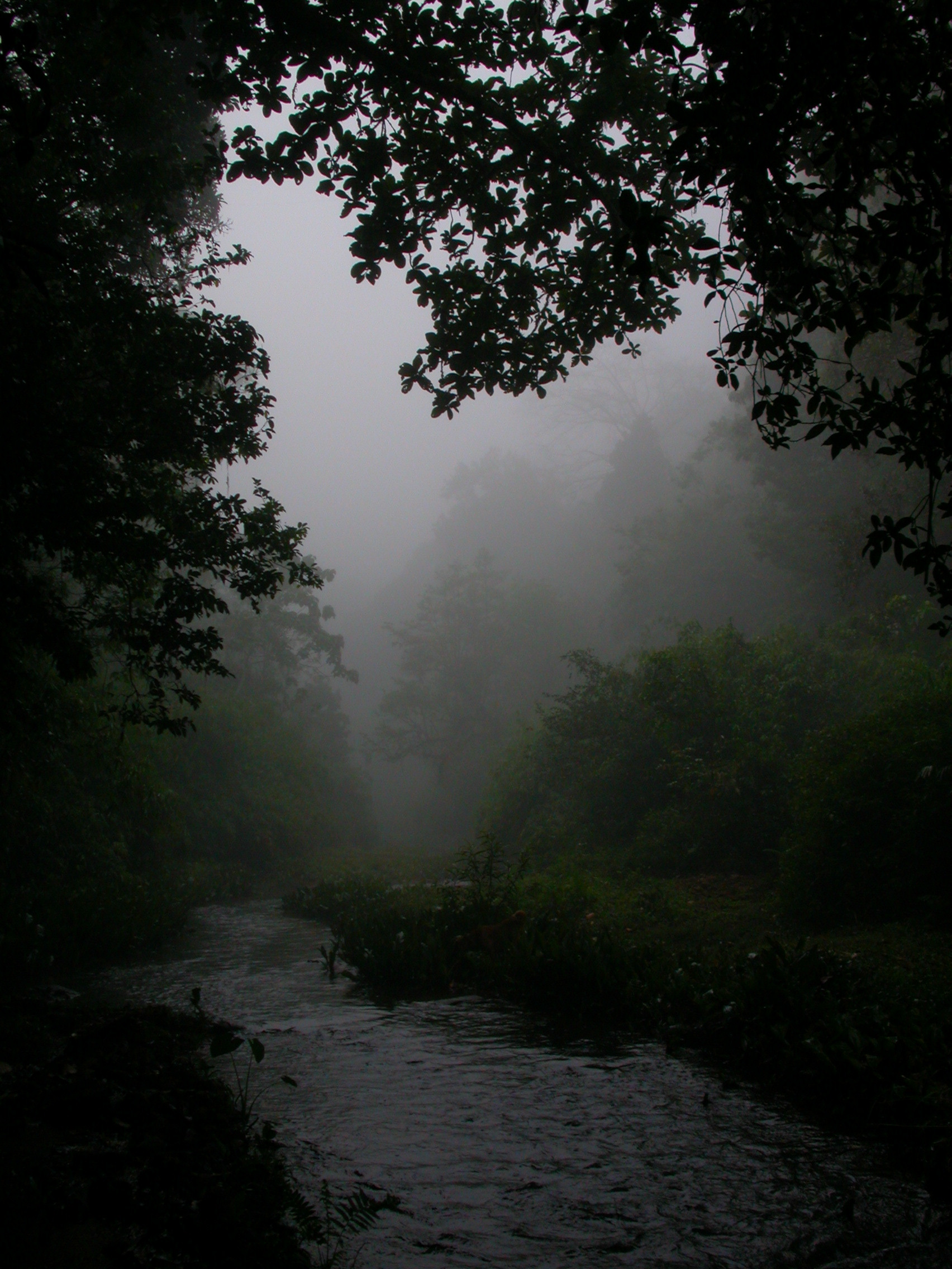 A monsoon stream in Wayanad. Photo credit: Gurukula Botanical Sanctuary Archives
