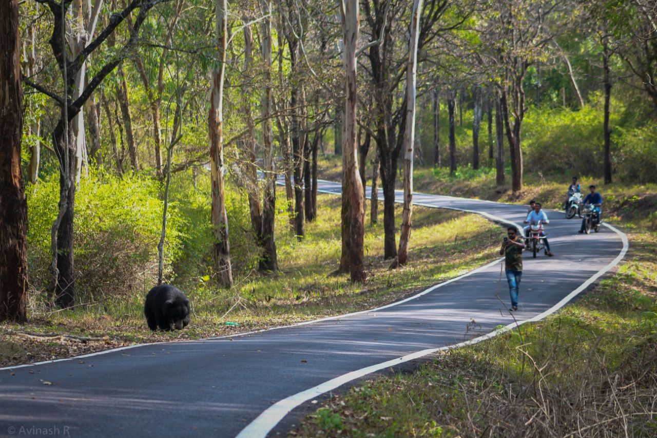Commuters taking photographs of a bear in Karnataka. Photo credit: Special arrangement.