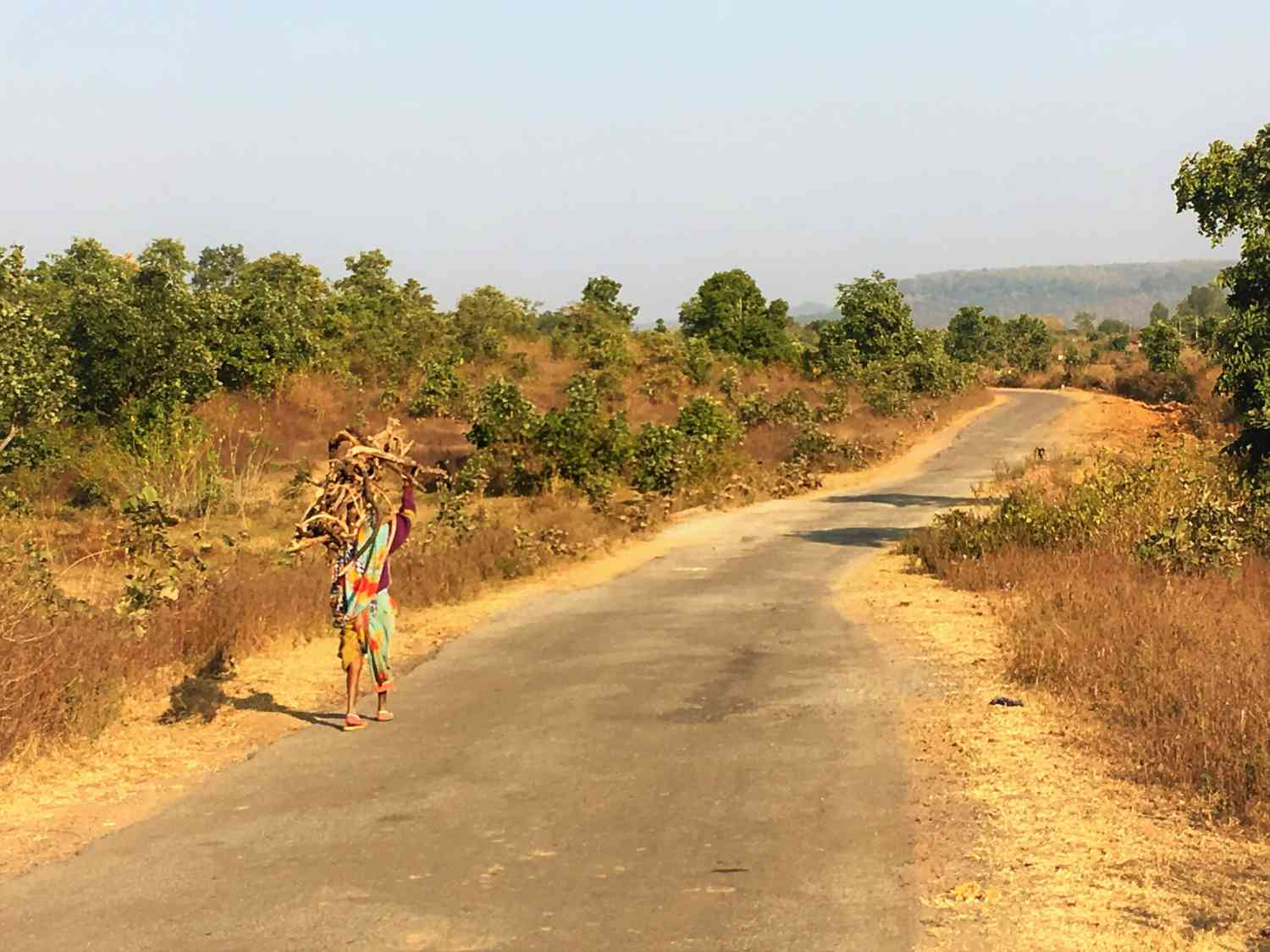 A villager carries firewood near Patni village in Chitrakoot.