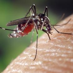 Chikungunya doesn't kill but patients suffer a lot