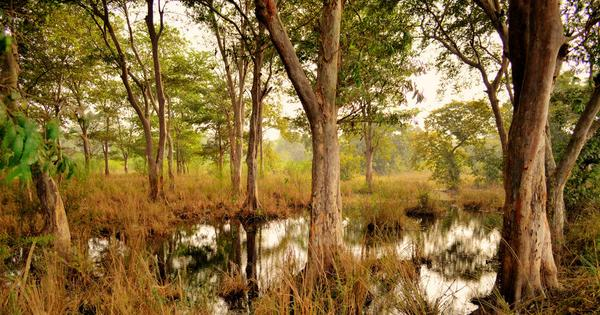 A short history of India's two-decade struggle to define what a forest actually is