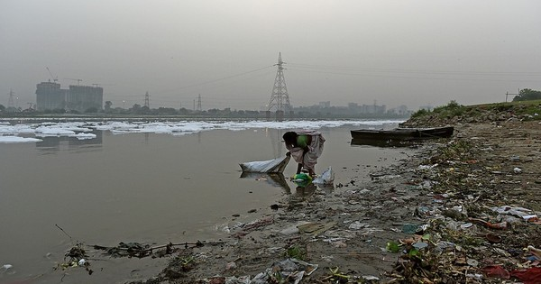 Why India needs a Wikipedia-like website on environment