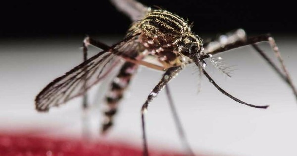 13 Indians among those infected with Zika virus in Singapore, confirms Foreign Ministry