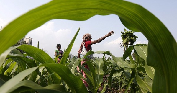 Why the government's claim about a farmer-oriented Budget is rather exaggerated