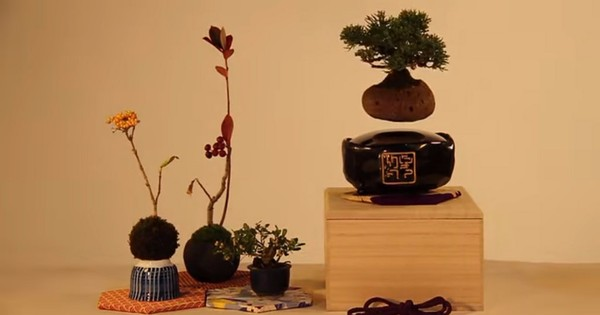 These amazing home Bonsai plants can float in mid-air