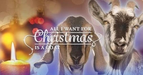 Goats got talent: Hear them belt out Christmas carols on a charity album