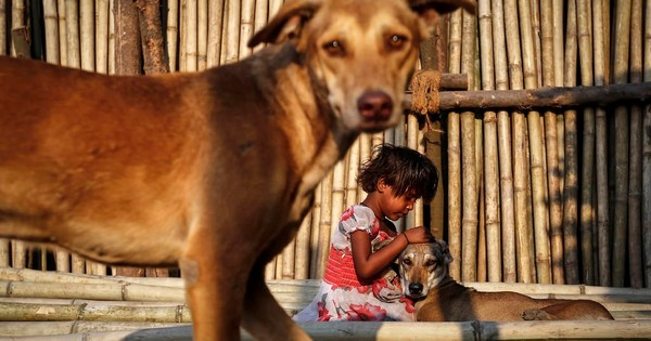 Lydian Nadhaswaram Facebook: In India, Animal Lovers Feeding Strays Are Being Met By