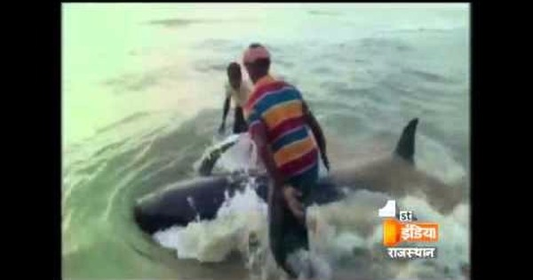 Bizarre footage shows dozens of whales just washing up on Tamil Nadu beach