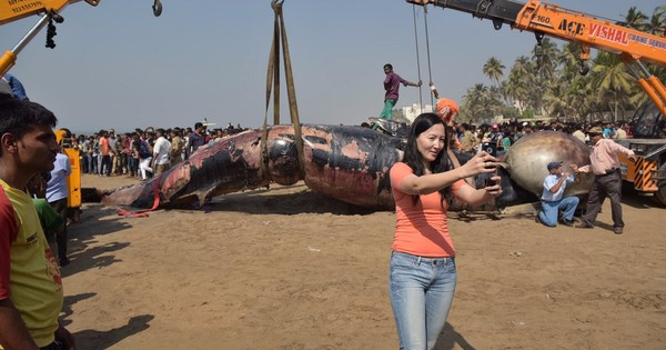 Photos: A massive whale's last journey on Mumbai's Juhu beach on Friday morning