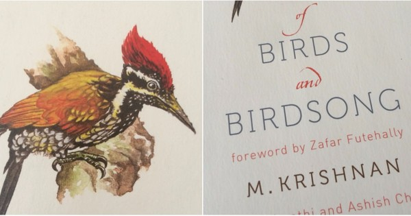 A book about birds that's really the story of vanishing beauty