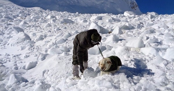 First person: We can tackle enemies on Siachen, but there's not much we can do about nature