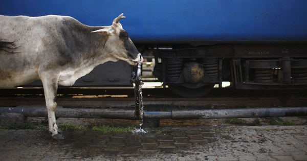 Here's why numbers don't make the case for cow slaughter to be banned across India