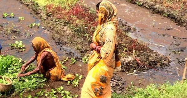 In Odisha, floating gardens provide hope to the landless