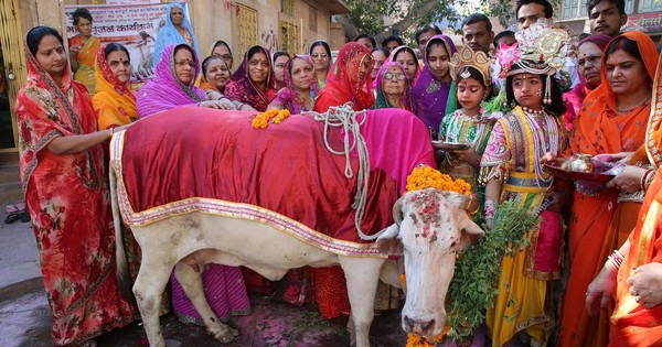 Use cow urine and dung to look like Cleopatra, says Gujarat gauseva board