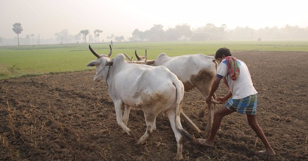 Why it is hard to double farmers' income by 2022