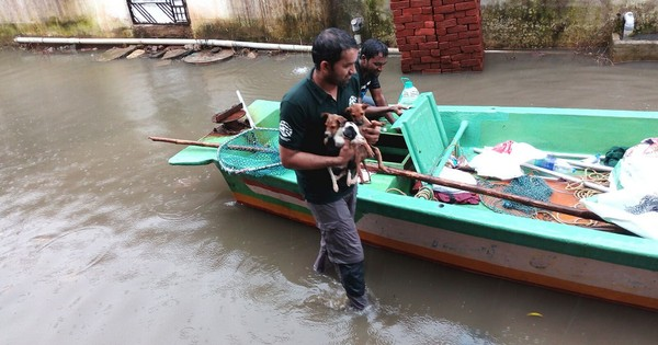 As Chennai sank, some volunteers turned their attention to a forgotten group – abandoned animals