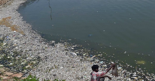 More than 90% of Bengaluru's lakes are polluted or encroached