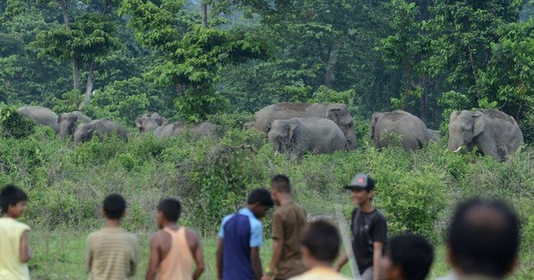 Keeping elephants away in Karnataka – by cutting 10,000 hectares of teak trees