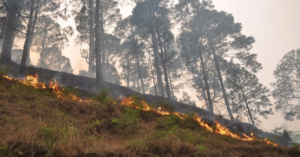 Uttarakhand diary: The mountains are on fire