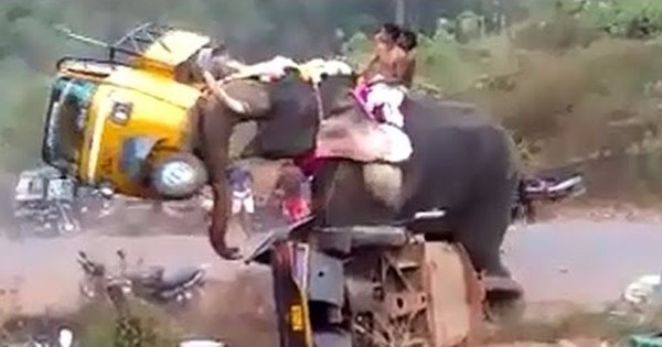 Watch a really angry elephant fling bikes and autos in the air like they were toys