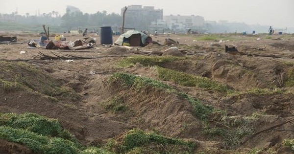 Bhaji on the beach: Why growing baby methi on Mumbai's Versova beach should not be illegal