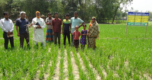 New rice cultivation method that uses less water sows hope in Bangladesh