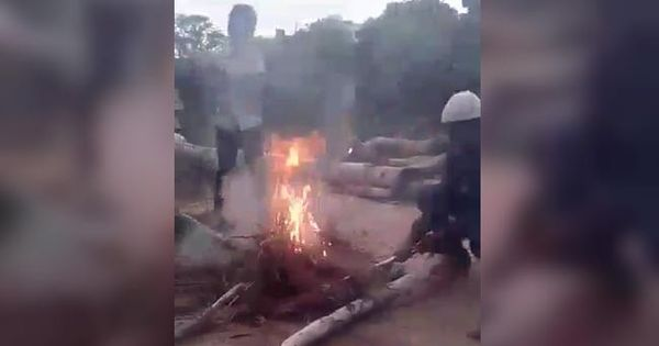 Eight Hyderabad boys detained for burning three puppies alive, recording video of crime