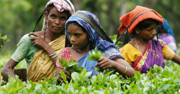 West Bengal's new ration scheme is enriching tea estate managements at the cost of their workers
