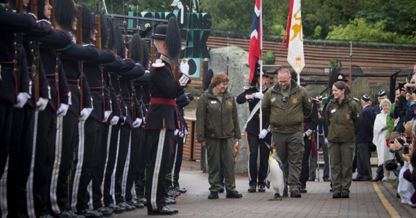Watch: Sir Nils Olav, the penguin promoted to Brigadier (and other illustrious military animals)