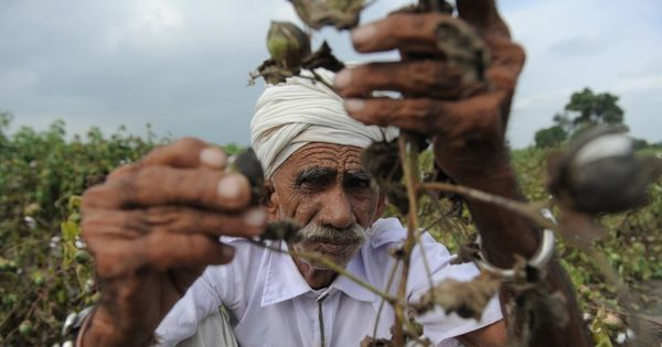 Counterpoint: The government is well within its rights to regulate the price of Bt cotton seeds