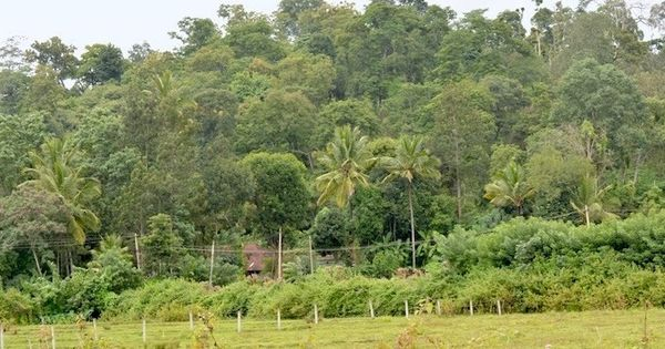 Coorg farmers are now growing coffee that is helping the environment