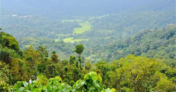 Farmers in Kodagu are raising honeybees in their coffee estates to get sweeter returns