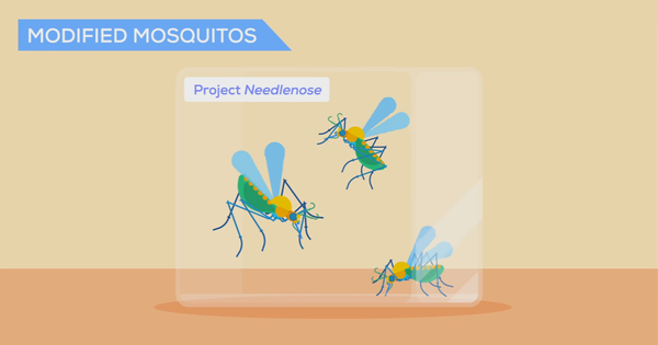 This video explains how mosquitoes can be used to fight malaria (in two words, genetic engineering)