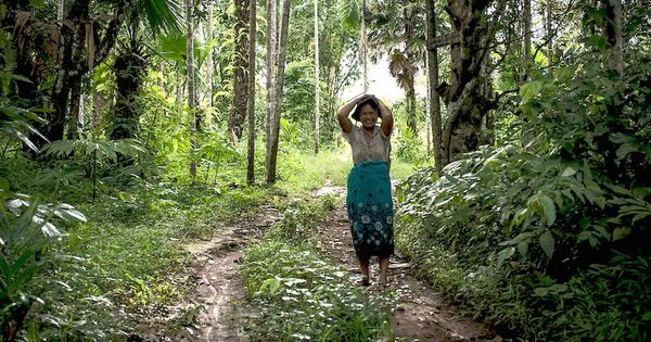 'We are revolutionaries': Villagers fight to protect Myanmar's forests