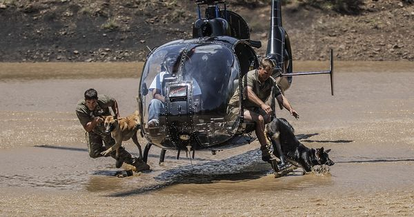Watch: Dogs are skydiving in South Africa to combat poaching of elephants and rhinos