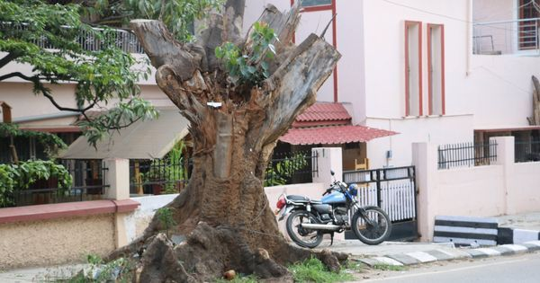 The end of nature: Why India is becoming a drier, hotter and angrier country