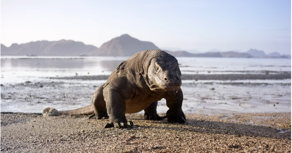 Drama, emotion and a spine-chilling chase: Welcome to 'Planet Earth II'