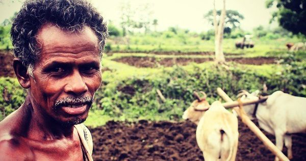 In Odisha, farmers are still growing food the hard way