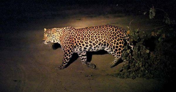 इस बार किसी इंसान का नहीं एक वन्य जीव का एनकाउंटर उत्तर प्रदेश पुलिस की मुसीबत बन गया है