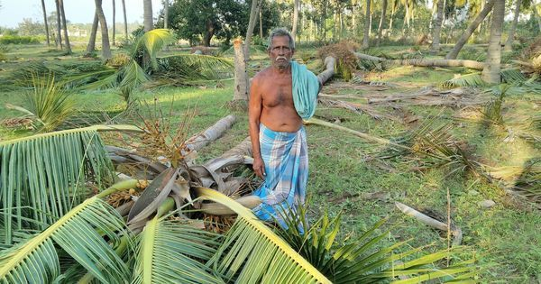 Cyclone Vardah flattens crops in Tamil Nadu – and the hopes of its farmers