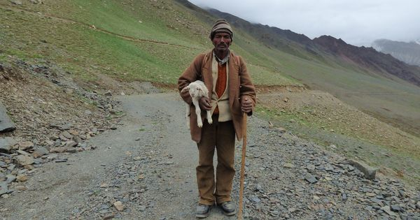 In remote Himalayas, Indian herders are finding new ways around climate change