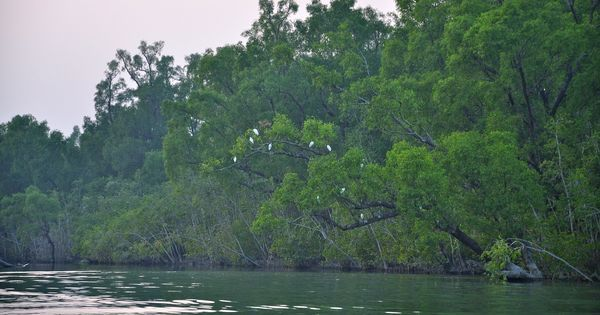 Tourists could soon cover all of Sunderbans in one trip, cruising between India and Bangladesh