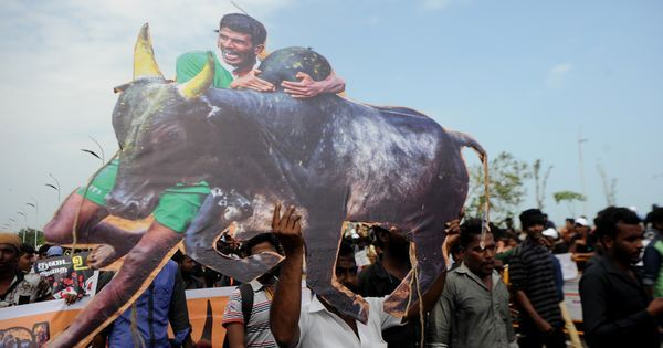 Tamil Nadu: Two killed in jallikattu at Pudukottai district