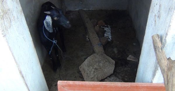 In a tribal hamlet in 'open defecation free' Kerala, toilets are being used as goat sheds