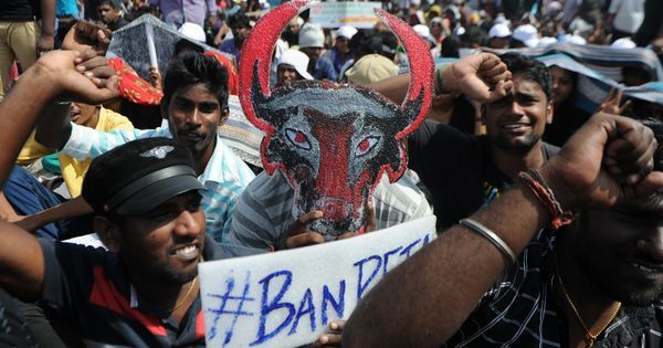 Jallikattu protests: Ex-HC judge will lead inquiry into alleged police violence, says Panneerselvam