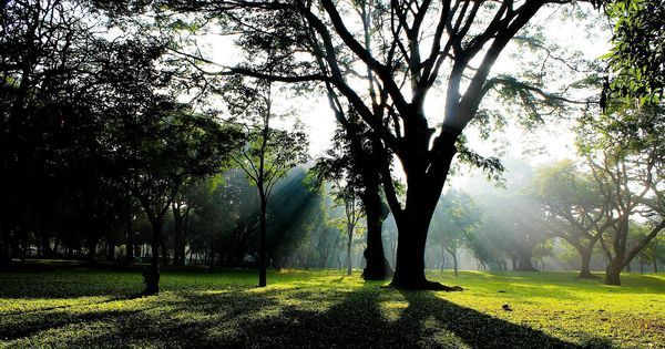 What Hyder Ali and Tipu Sultan had to do with Bangalore's love affair with trees